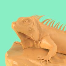 Lizard_05